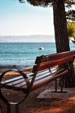 Banc côtier sous l'arbre avec la vue de mer Photographie stock libre de droits
