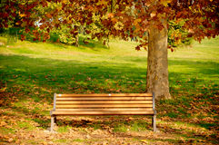 Banc d'arbres d'automne Photo stock
