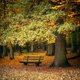 Banc dans la forêt d'automne photos libres de droits