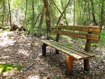 Banc dans la forêt indigène de parc national de Tsitsikamma, Afrique du Sud Photographie stock libre de droits