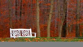 Banc dans les bois Photos libres de droits