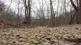 Banc dans les bois Images libres de droits