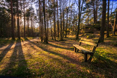 Banc dans un bois de pin, arbres jetant des ombres à la lumière du soleil de soirée chez Furulunden, Mandal, Norvège photo libre de droits