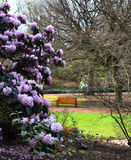 Banc dans un jardin avec des fleurs Photographie stock libre de droits