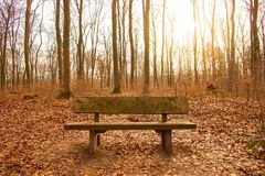 Banc dans une forêt Photographie stock