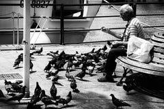 Banc de alimentation isolé de pigeons d'homme Photos libres de droits