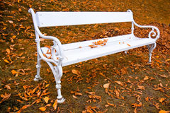 Banc de blanc d'automne Photos stock