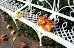 Banc de jardin avec des lames d'érable Image stock