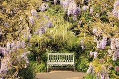 Banc de jardin rayé par glycines Image libre de droits