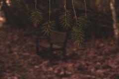 Banc de paix par les feuilles de pin images libres de droits
