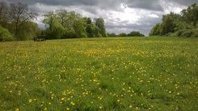 Banc de parc dans le domaine de la scène de renoncules et de nuages de tempête Images libres de droits