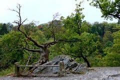 Banc de parc en vallée de rivière présagée Images libres de droits