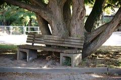 Banc de parc sous le vieil arbre photographie stock libre de droits
