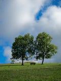 Banc de parc tranquille au-dessous de deux arbres Photographie stock