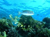 banc de poissons Photo stock