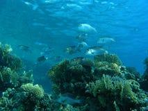 banc de poissons Image stock