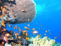 banc de poissons Photo libre de droits