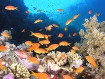 banc de récif de poissons Photo libre de droits