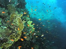 banc de récif de poissons Images stock