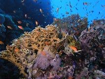 banc de récif de poissons Photos stock