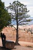 Banc de surveillance de l'Utah de gorge de Bryce Images stock