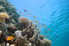 Banc des poissons de scalefin Photographie stock libre de droits