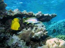 Banc des poissons sur le récif Photo stock