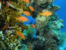 Banc des poissons sur le récif Photographie stock libre de droits