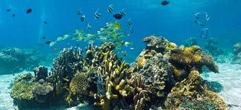 Banc des poissons sur le récif-panorama Photographie stock libre de droits