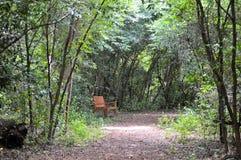 Banc en bois dans l'itinéraire aménagé pour amateurs de la nature Images stock