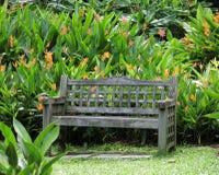 Banc en bois parmi le Heliconiaceae Hort Image stock