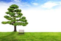 Banc en bois sous un arbre Photographie stock libre de droits