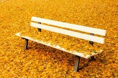 Banc en parc d'automne Photo stock