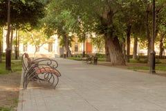 Banc en parc pendant le matin d'été images libres de droits