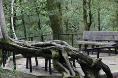 Banc en parc Un beau vieil arbre Photos libres de droits