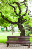 Banc et arbre de parc Photo stock