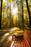 Banc et Sun lumineux avec Ray Is Shining Through Trees en automne photos libres de droits
