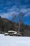 Banc et table de pique-nique placés près d'un arbre couvert par la neige Images stock