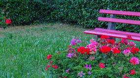 Banc extérieur de jardin rose avec des fleurs et des accessoires Photos stock