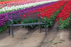 Banc par des tulipes Photos libres de droits