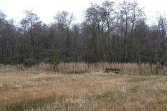 Banc pour des randonneurs dans Weerribben typique Kalenberg, Pays-Bas image libre de droits