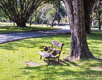 Banc sous l'arbre, parc à Bangkok Image stock