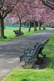 Banc sous les fleurs roses en stationnement de Greenwich Image libre de droits