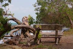 Banc sur la plage images libres de droits