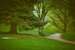 Banc, un chemin et un grand pin en beau parc par jour pluvieux dans Kislovodsk, Russie photos libres de droits