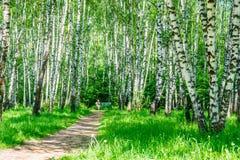 Banc vert en parc vert photo libre de droits