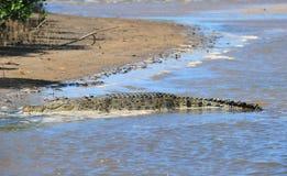 Banca del fiume Crocodile di eustarine dell'acqua salata, cooktown, Queensland, Australia immagine stock libera da diritti