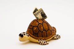 Banca della tartaruga Fotografia Stock Libera da Diritti