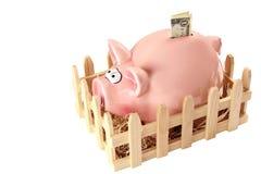 Banca Piggy con il dollaro Immagine Stock