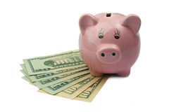 Banca del maiale sui dollari isolati su fondo bianco Fotografie Stock Libere da Diritti